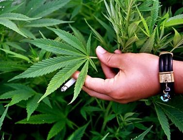 Гаи и марихуана выращивание конопли закон рф