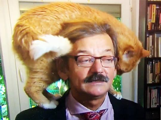 Ласковый кот едва не сорвал напряженное интервью