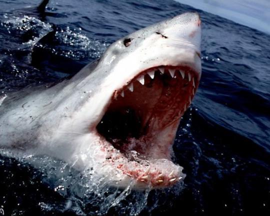 В Египте на курорте акула убила туриста