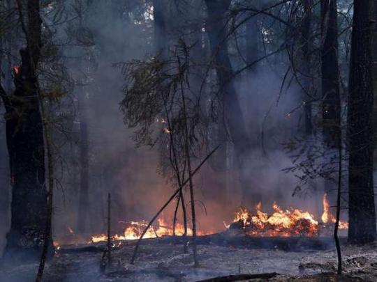 Крупнейший в истории Калифорнии пожар возник из-за умышленного поджога