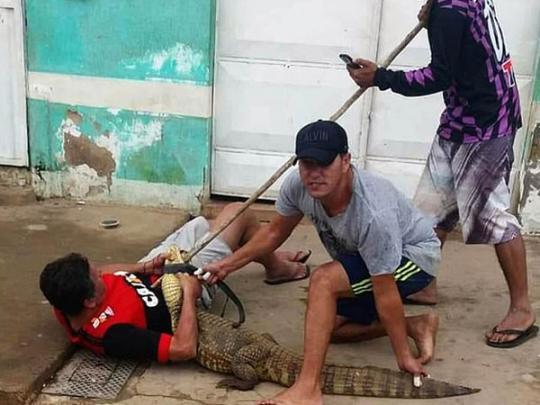 Крокодил в Бразилии