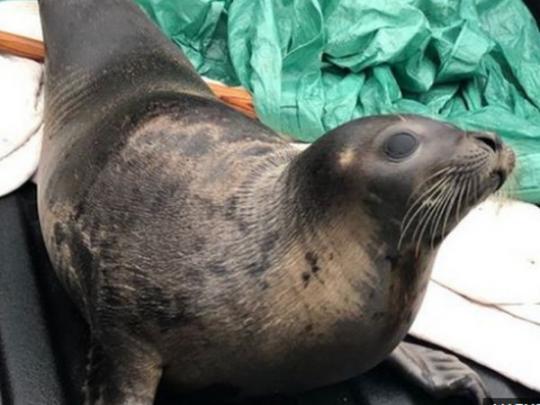 Тюлени захватили город в Канаде   8:42
