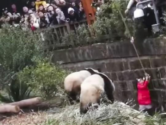 Девочка с пандами