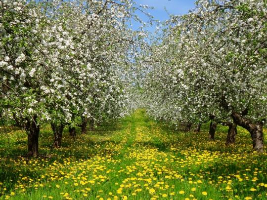 деревья и цветы