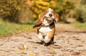 Фотоконкурс ознакомленный собакам Judges' Special Mention