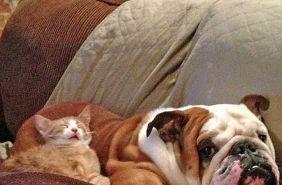 Котики равным образом собачки