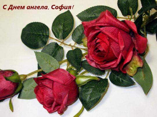 День ангела Софии