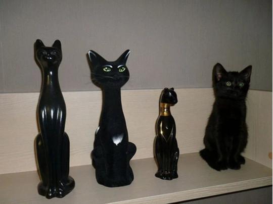 Кот среди статуэток