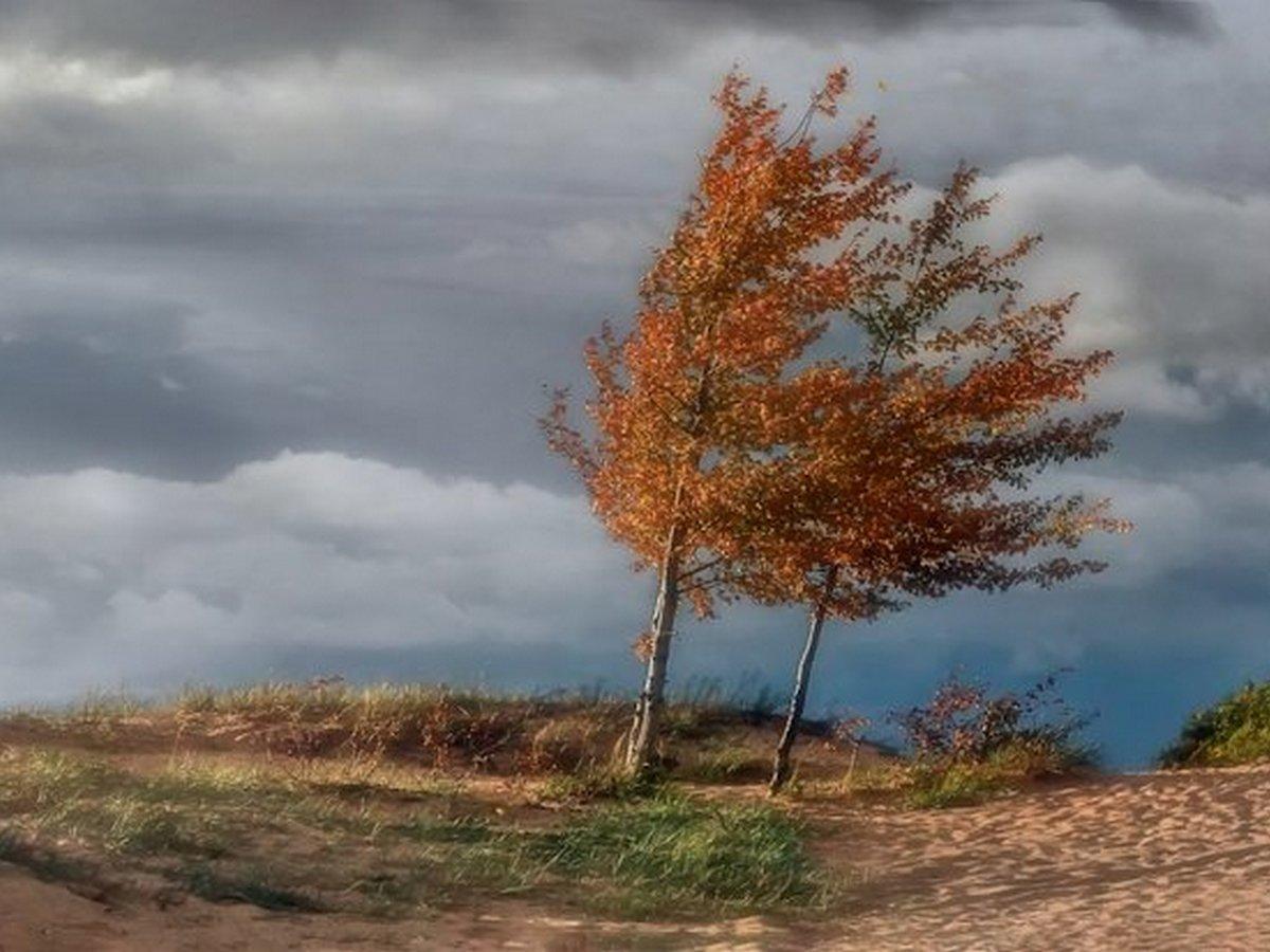 золотистый ветер картинки запросу администратор фотосалона