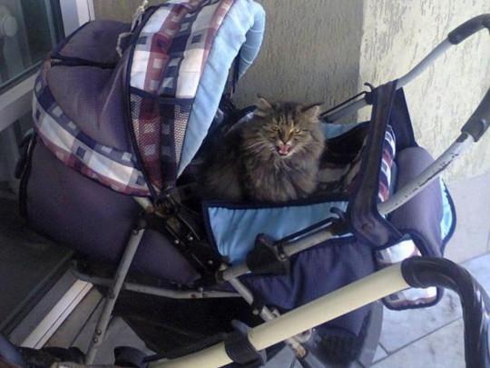 НаВиннитчине кот задушил 9-месячную девочку
