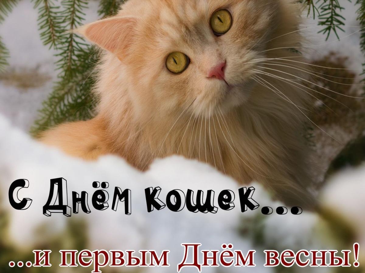 Открытки про кошечек сегодня день кошек