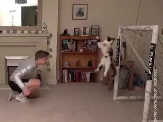 Крис Диксон и его кот