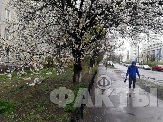 май в Киеве