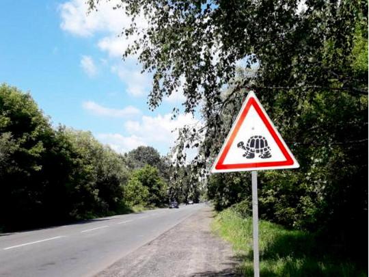 дорожный знак черепахи