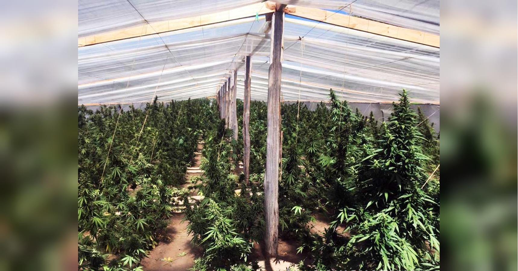 Мешок для выращивание конопли гора конопли