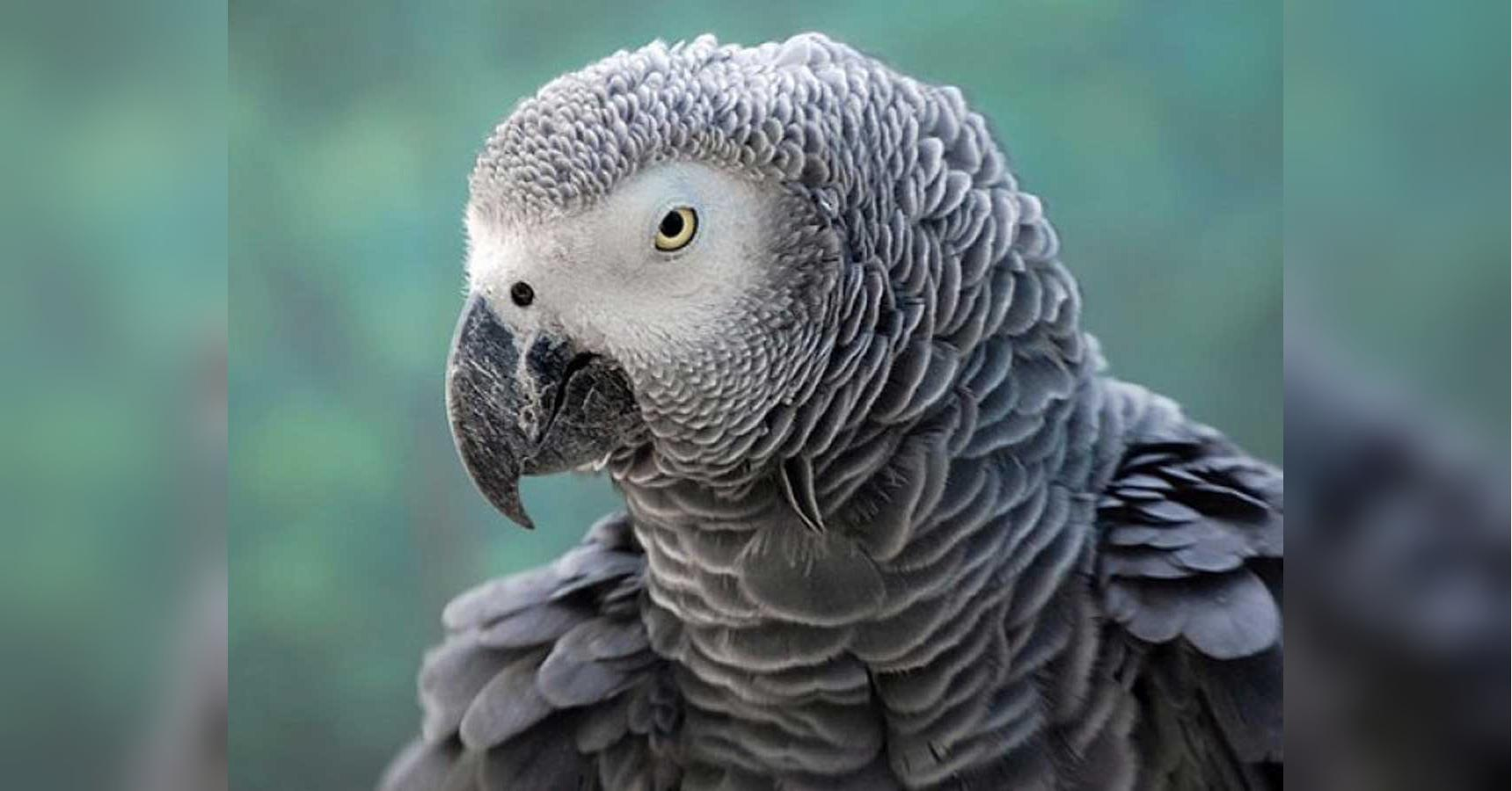 Parrots in wildlife park removed from public area after cursing at visitors