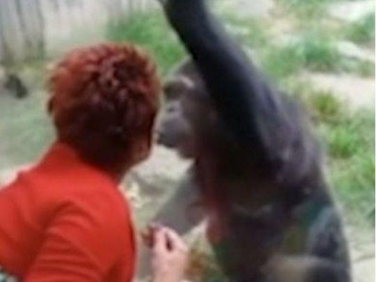 Бельгийке запретили посещать зоопарк из-за романа с обезьяной - «ФАКТЫ»