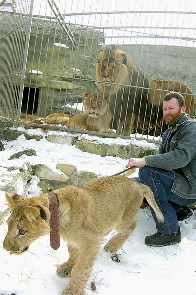 Картинки льва зимой