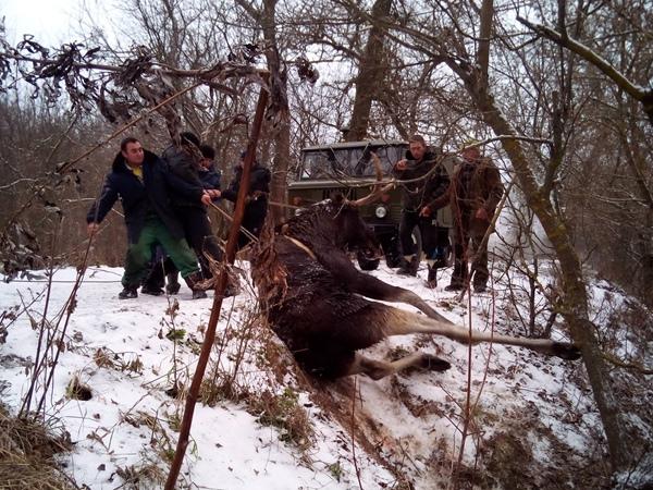 Cотрудники экстренных служб вХарьковской области спасли лося изледяной воды