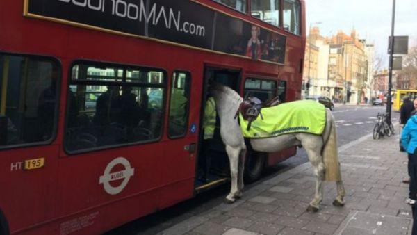 ВЛондоне лошадь попыталась сесть вавтобус