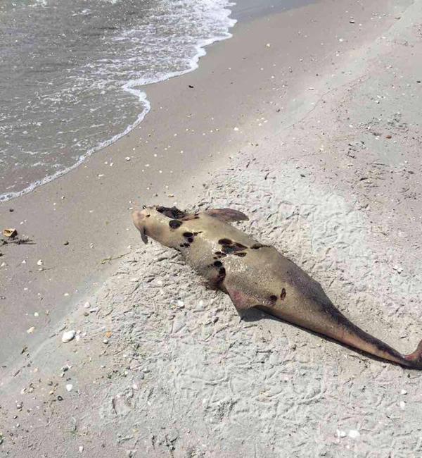 НаОдесчине вбраконьерских сетях погибли десятки дельфинов: «Это преступление»