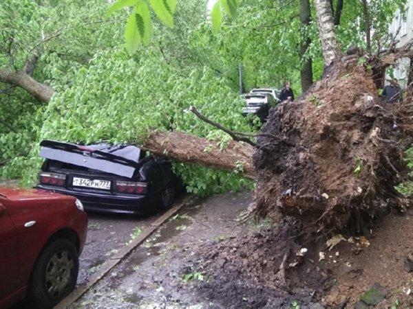 В столице России шторм унёс жизни 7-ми человек. ВСергиево-Посадском районе пока спокойно