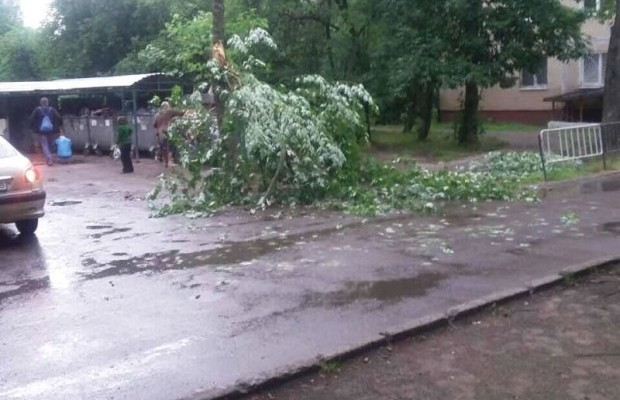 Буря воЛьвове: поваленные деревья, сломанные крыши иразбитые авто