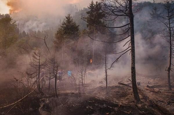 Министр обороны Грузии отменил поездку встолицу Украины  из-за лесных пожаров