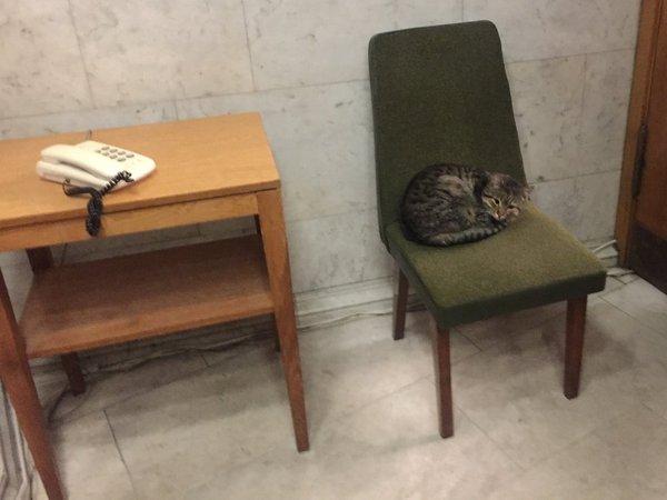 МИД Украины «нанял» кота поимени Амбассадор