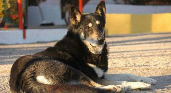чувствительностью пес хаски на могиле хозяина история все Клеймёнову