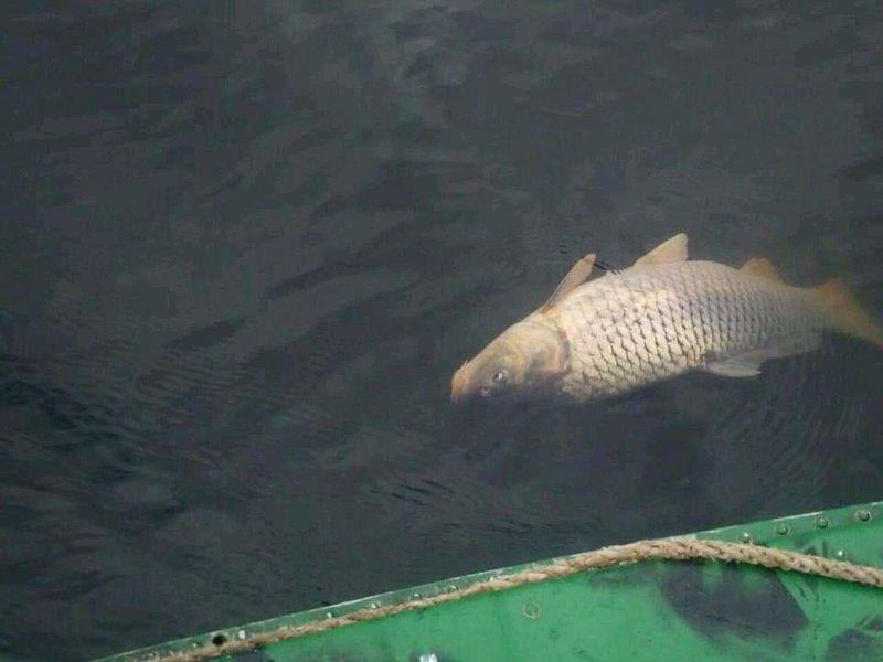 Экологическая катастрофа: на Херсонщине массово гибнет рыба (ФОТО)