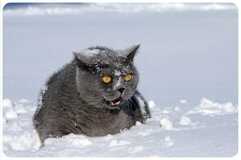Первый день зимы картинки смешные