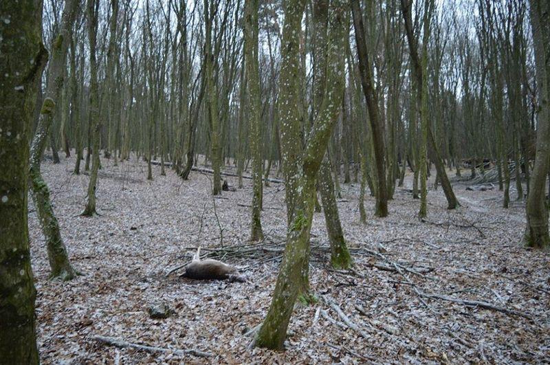 На Волыни неизвестные устроили бойню в лесничестве: убиты семь ланей
