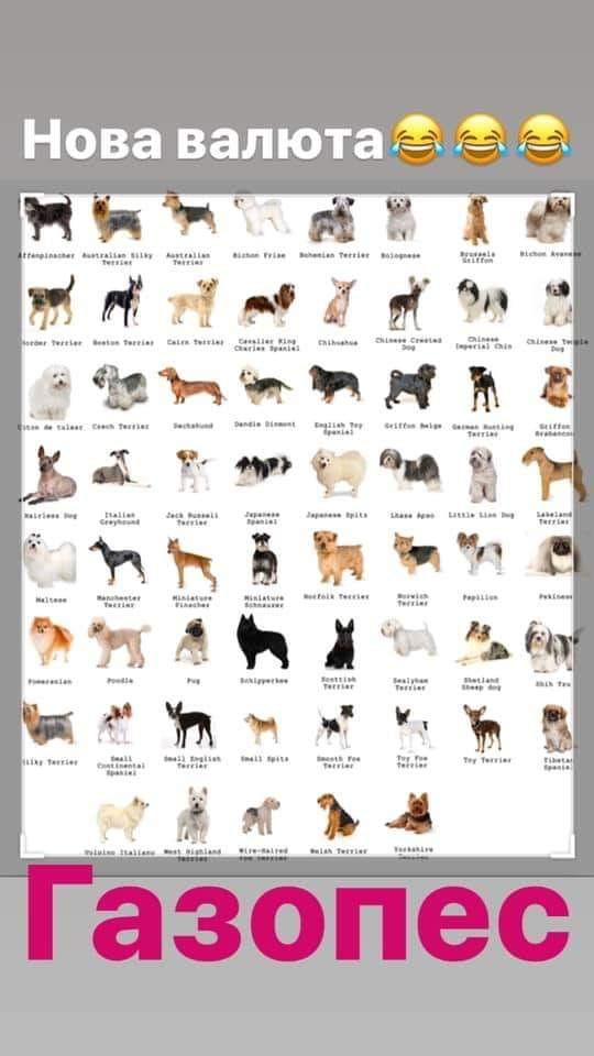 """Заява """"слуги народу"""" про продаж собаки висміяли яскравими фотожабами"""