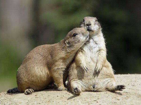 Животные тоже умеют любить: Сеть поразил снимок двух кенгуру (ФОТО)