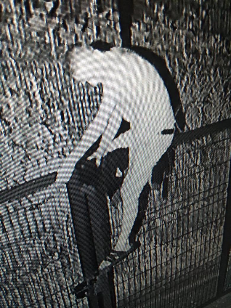 Пытался затереть следы курткой: незадачливый нарушитель украинско-российской границы попал на видео