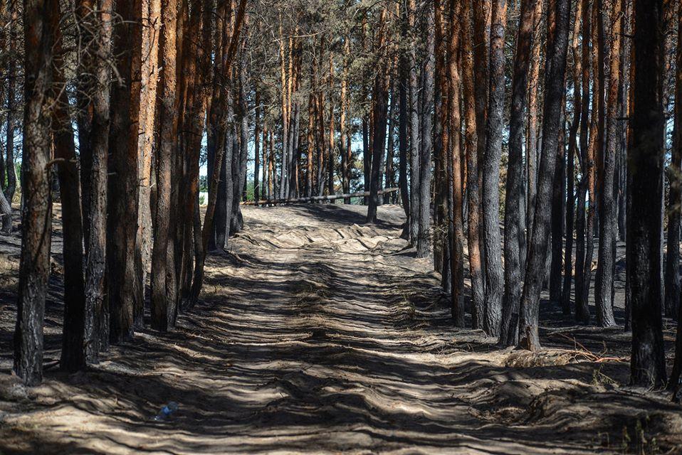 Ветер раздувает тлеющую древесину: в сети показали последствия масштабного пожара на Луганщине